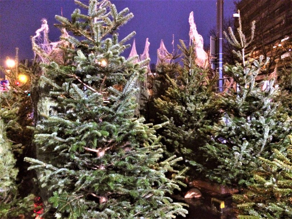 パリのクリスマスのもみの木