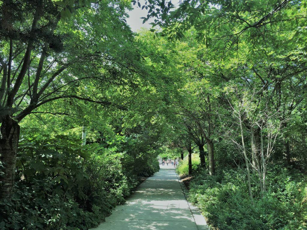 マーティン・ルーサー・キング公園の初夏の緑のトンネル