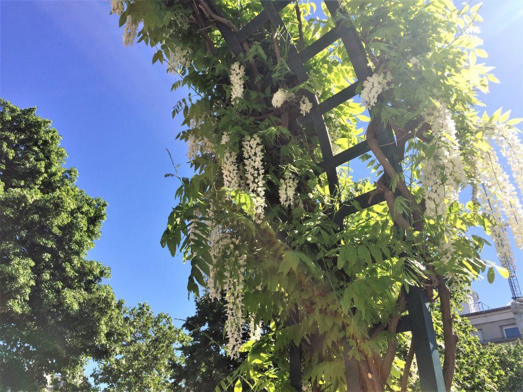 プロムナード・プランテの青空と花のコントラスト