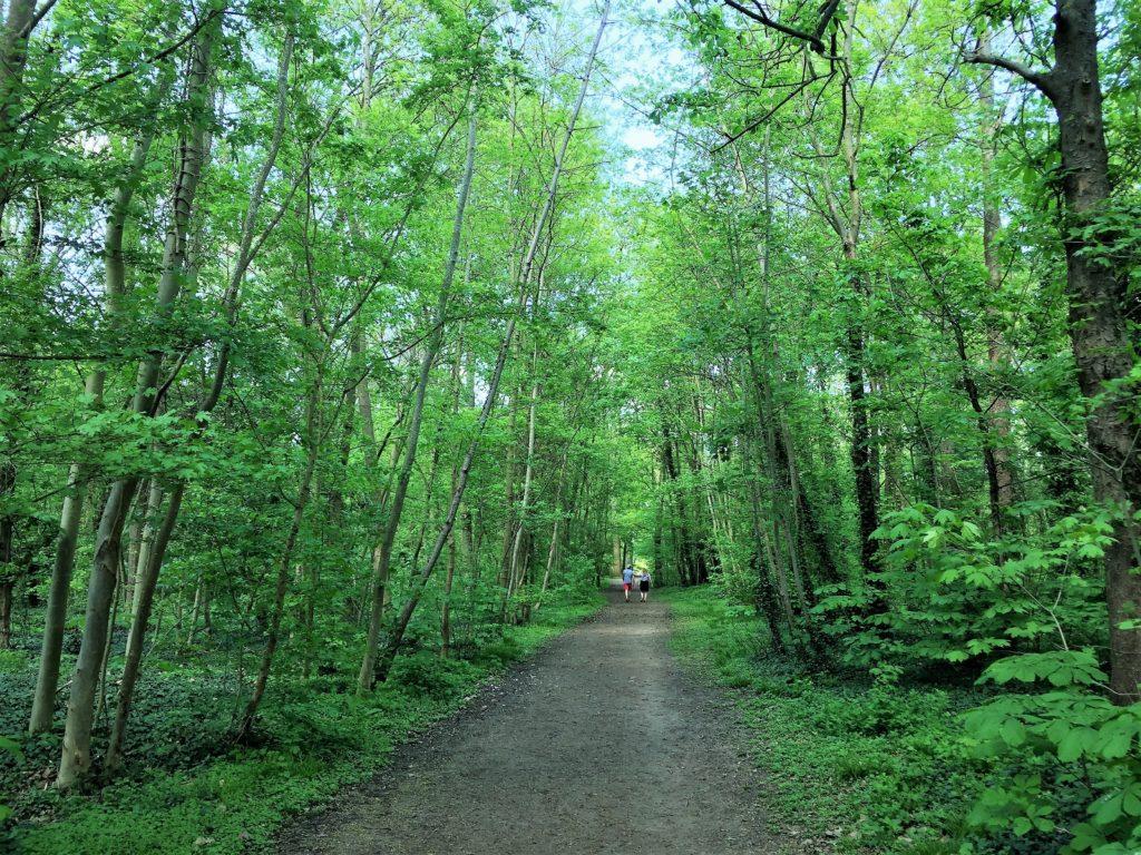 ソー公園の中の森