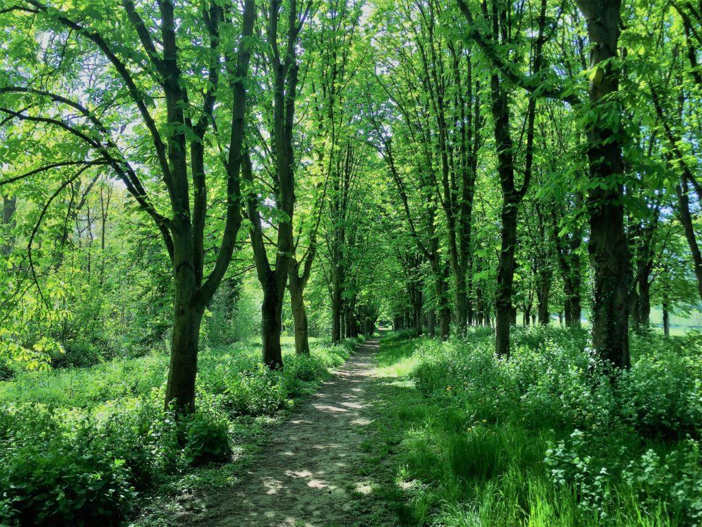 ソー公園の森林浴