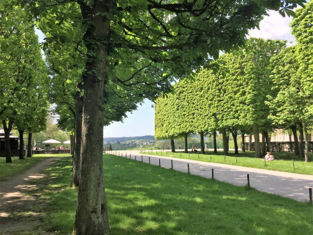 ソー公園のきれいに整備された木々