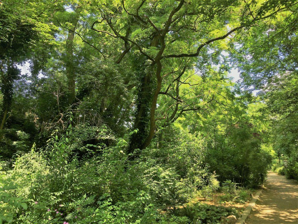 プロムナード・プランテの森の中の散歩道