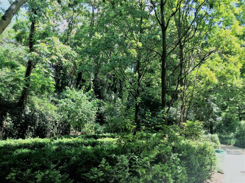 プロムナード・プランテの森