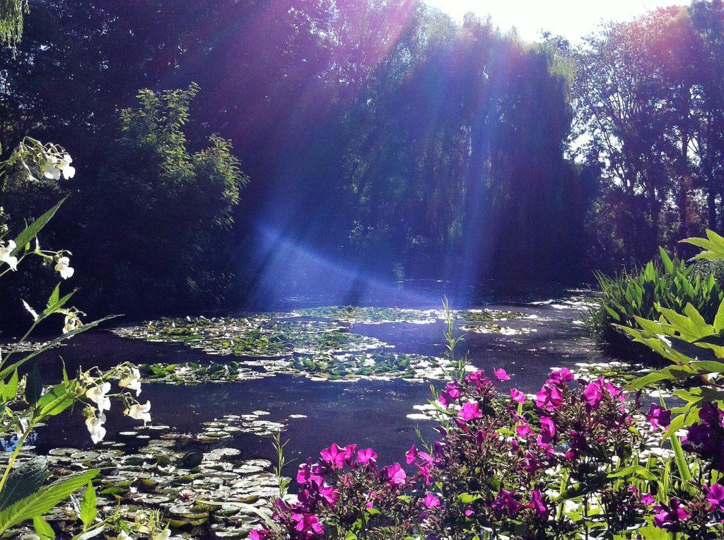 ジヴェルニーの朝日に輝く睡蓮の池