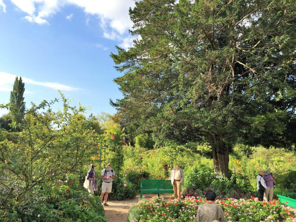 ジヴェルニーのモネの家の庭の大きな木