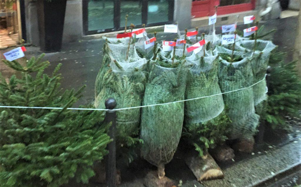 クリスマスのもみの木