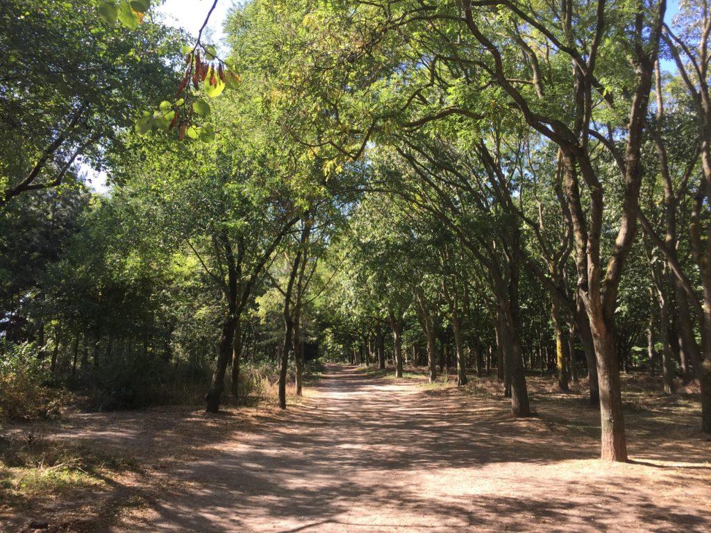ブローニュの森の木漏れ日